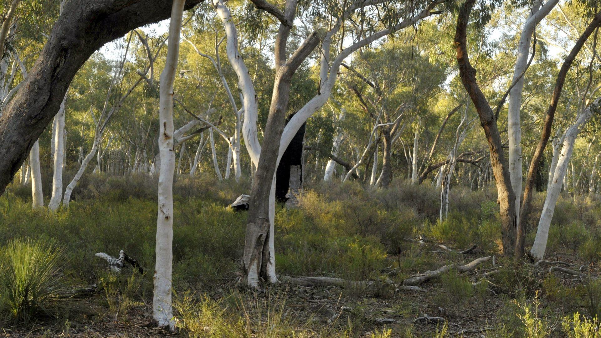 Protect the Pilliga Forest