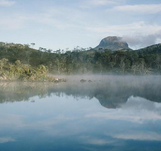 Tasmania's Forests